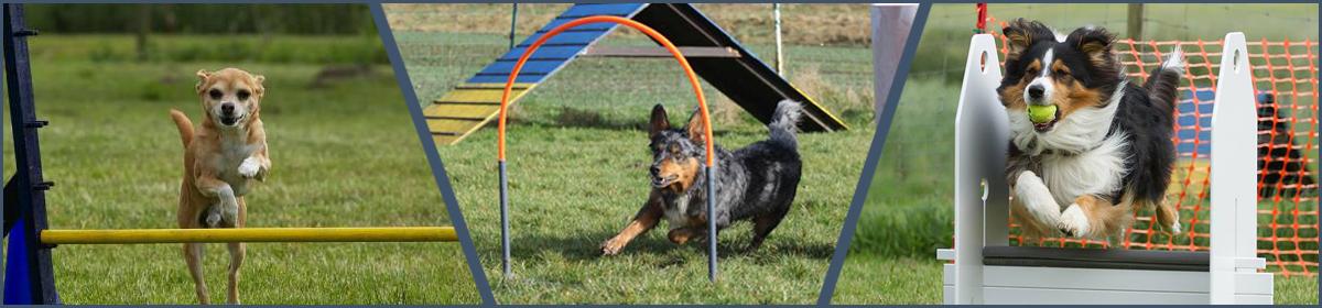 Familydog Reher e.V.