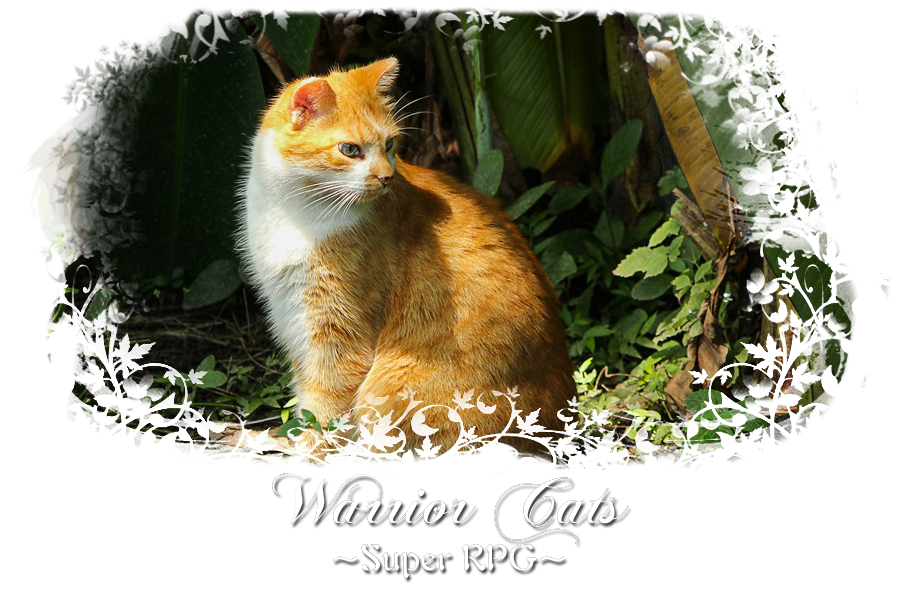 Warrior Cats Super Forum