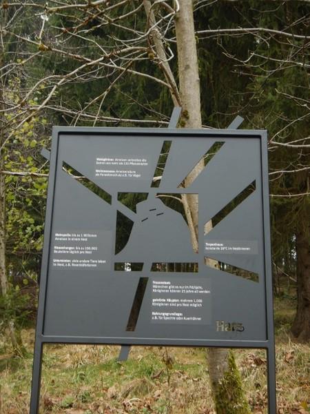Ameisen Hexenstiegameisenhaufl9u5n