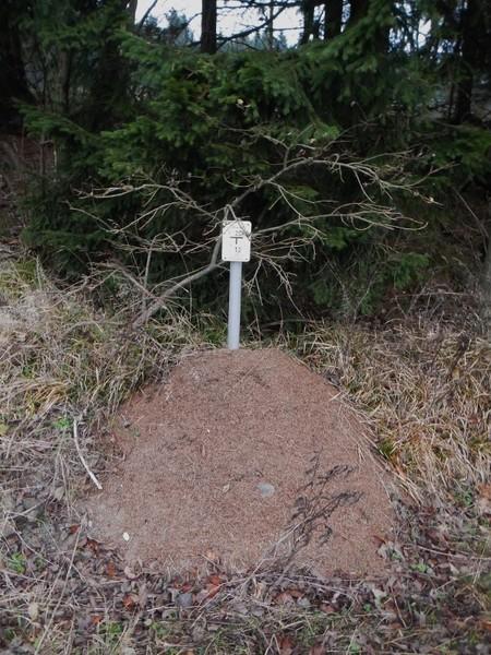 Ameisen Hexenstiegameisenhaufs9sgq