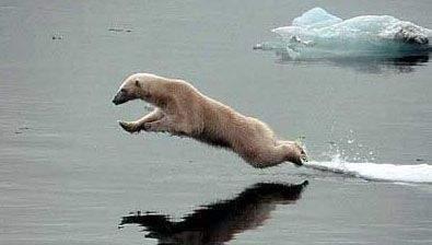 Śmieszne zdjęcia zwierząt #2 62