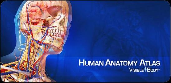Human Anatomy Atlas 2017 | SerbianForum