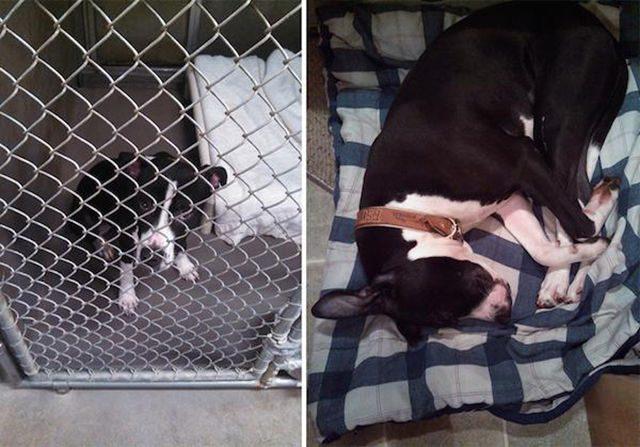 Przed i po adopcji 18