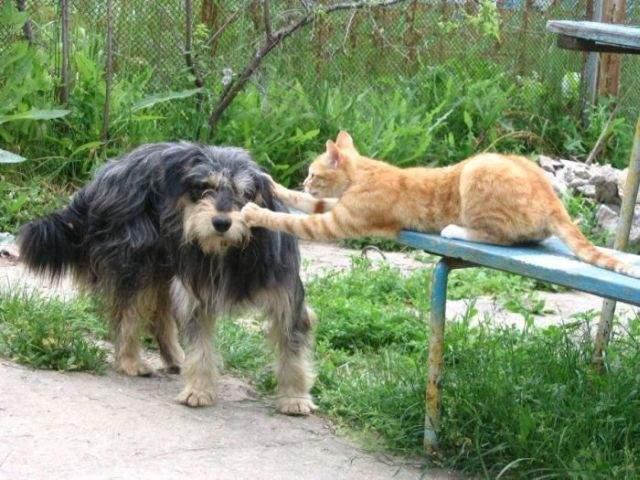 Kot i pies w jednym domu ? 19