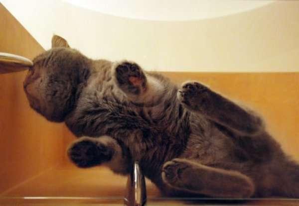 Śmieszne zdjęcia kotów 29