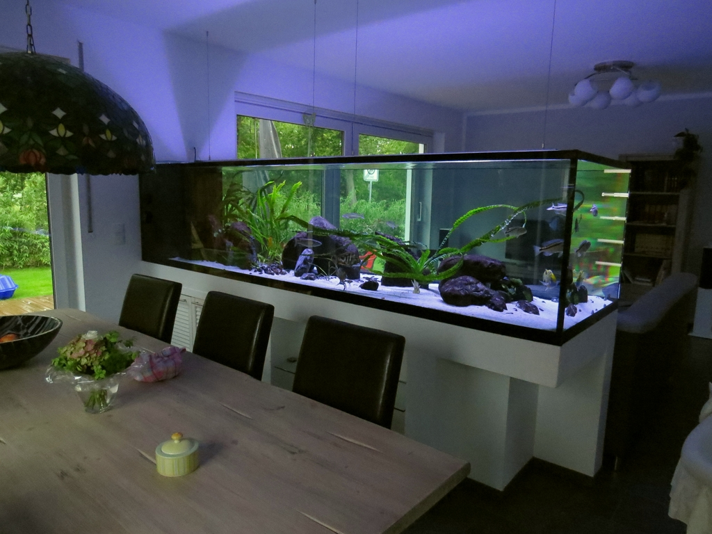 2000l malawi r uber 302x86x70 seite 6 aquarium forum. Black Bedroom Furniture Sets. Home Design Ideas