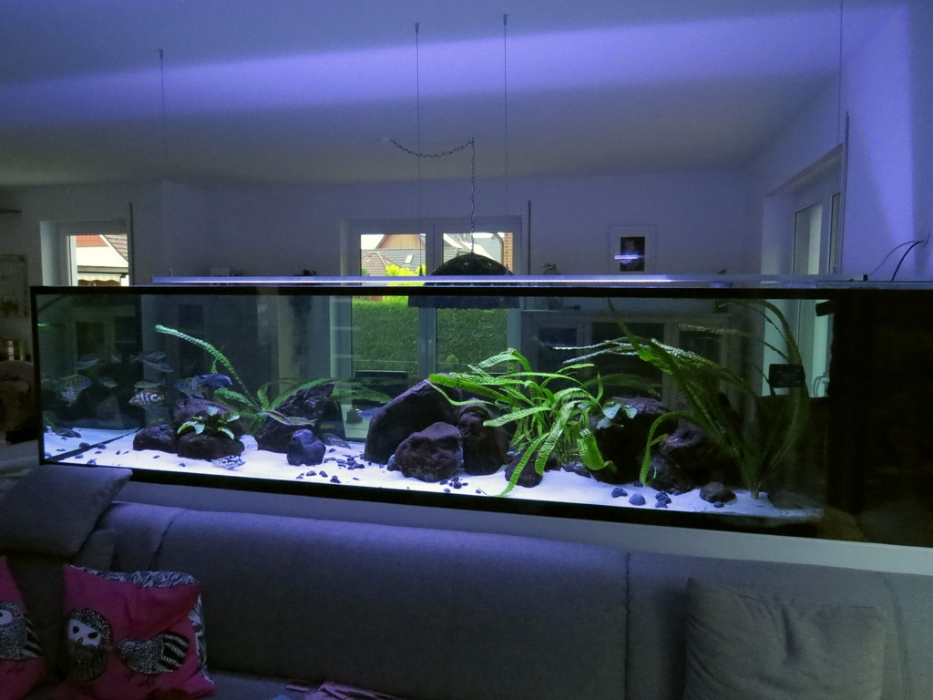 2000l malawi r uber 302x86x70 seite 6 aquarium forum. Black Bedroom Furniture Sets. Home Design Ideas