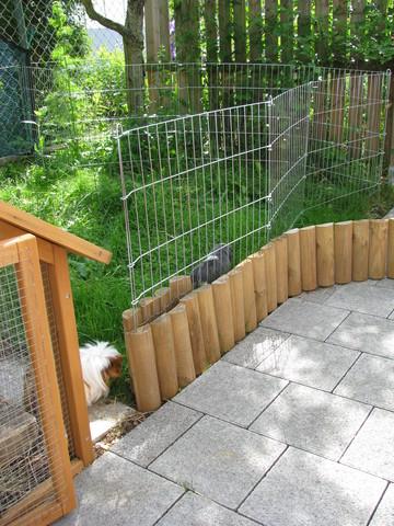 Kleiner Holzzaun zaun für auslauf im garten - meerschweinchen haltung