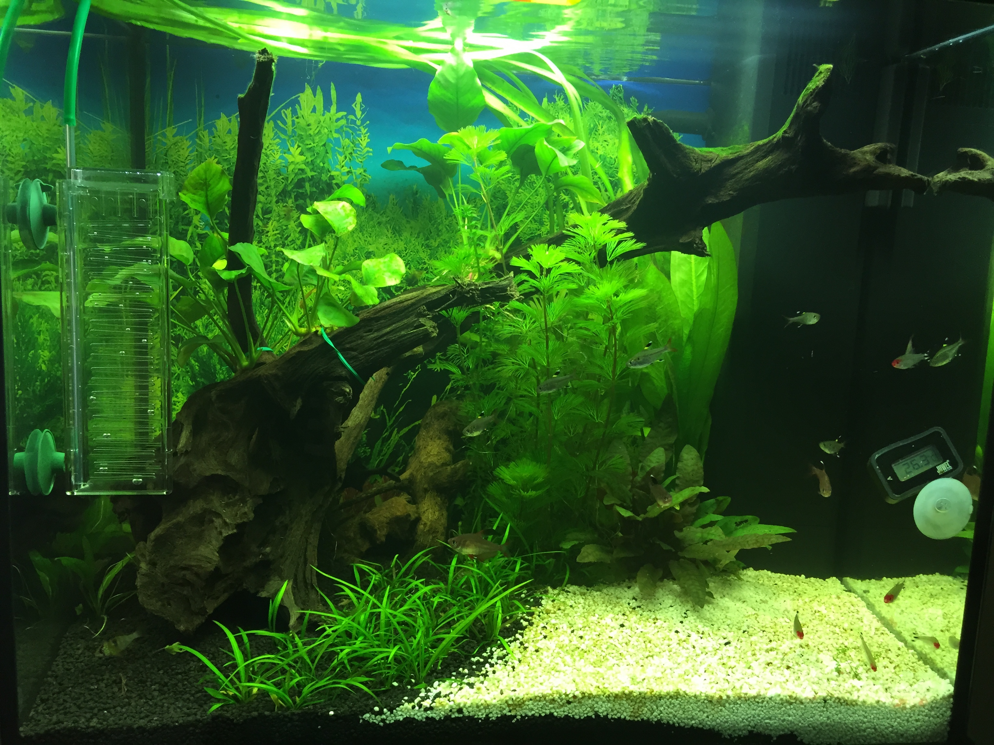 empfehlung led beleuchtung juwel lido 120 aquariumbeleuchtung aquascaping forum. Black Bedroom Furniture Sets. Home Design Ideas