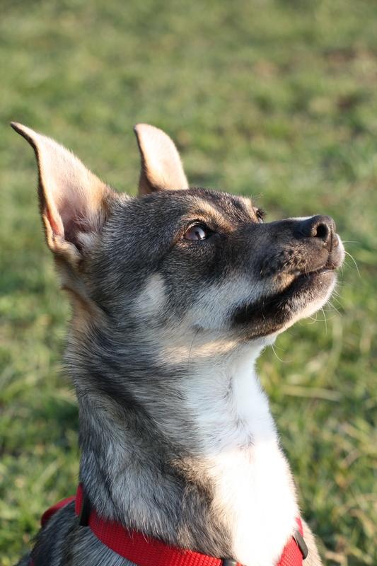 Wie viele Hunde hat das Ratten- und Mäusereich? Img_1877i2uic