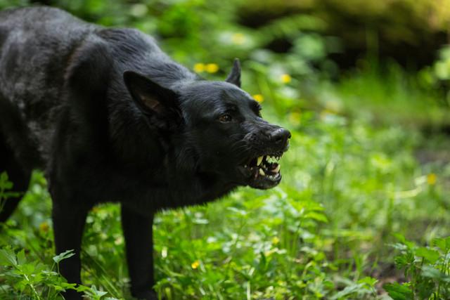 gro er b ser schwarzer hund seite 12 sonstiger talk rund um den hund das. Black Bedroom Furniture Sets. Home Design Ideas