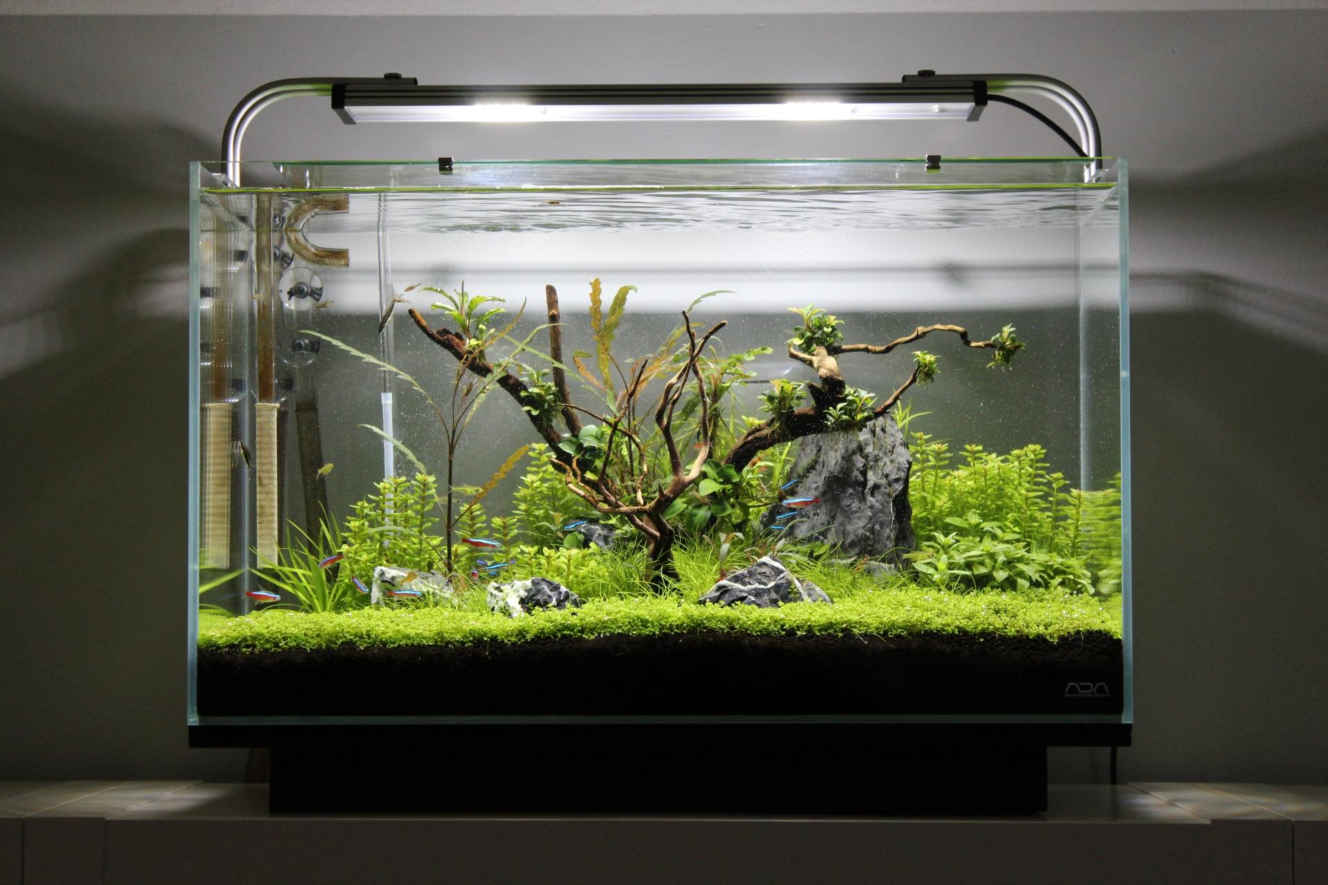 Aquarium Schrank Nano Cube: Aquarium mit glasabdeckung: aquarium ...