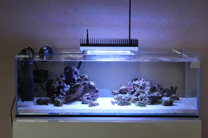 nano s shallow reef unter 100 liter dein meerwasser forum f r nanoriffe. Black Bedroom Furniture Sets. Home Design Ideas