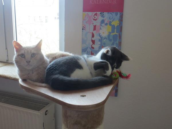 willkommen pixies und bayou 2 spanier ziehen ein seite 3 katzen forum. Black Bedroom Furniture Sets. Home Design Ideas