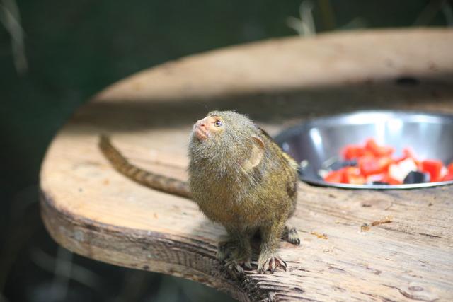Und hier noch bilder aus dem zoo in salzburg