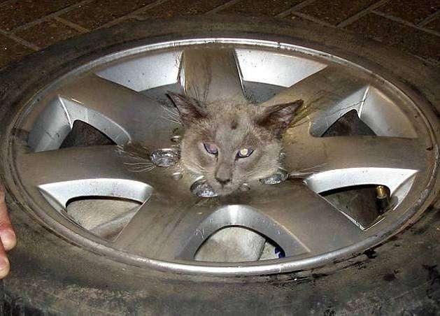 Kot czyszczący alufelgi 1
