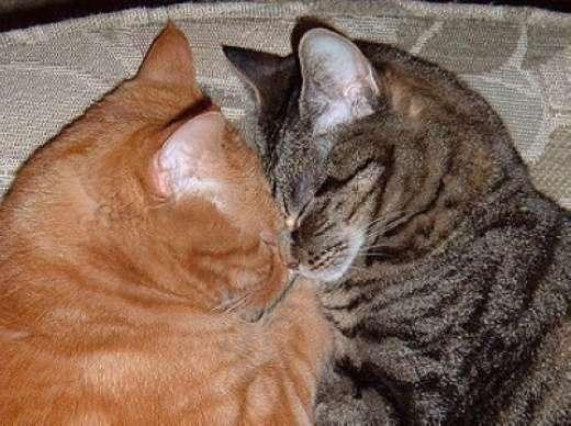 Rozpuszczone, leniwe koty 21