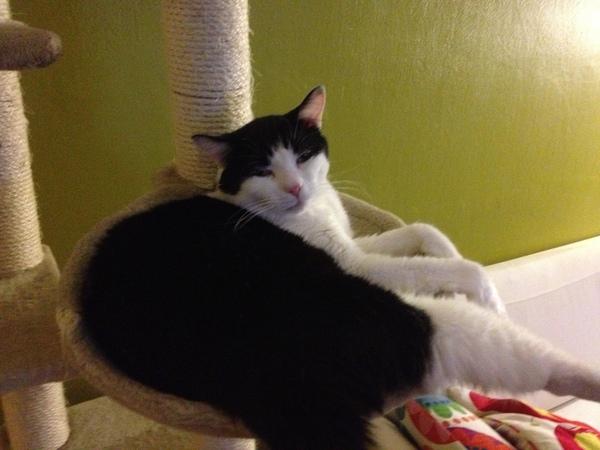 kann hcm bei katzen zum stillstand kommen