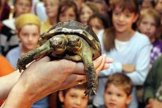 Janus - dwugłowy żółw 7