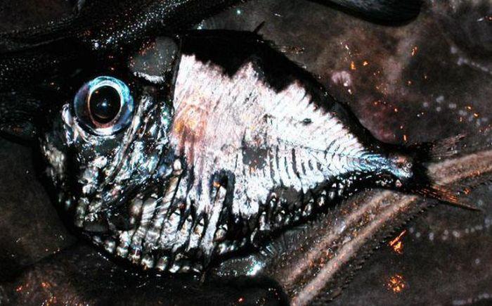 Zwierzęta z oceanicznych głębin 24