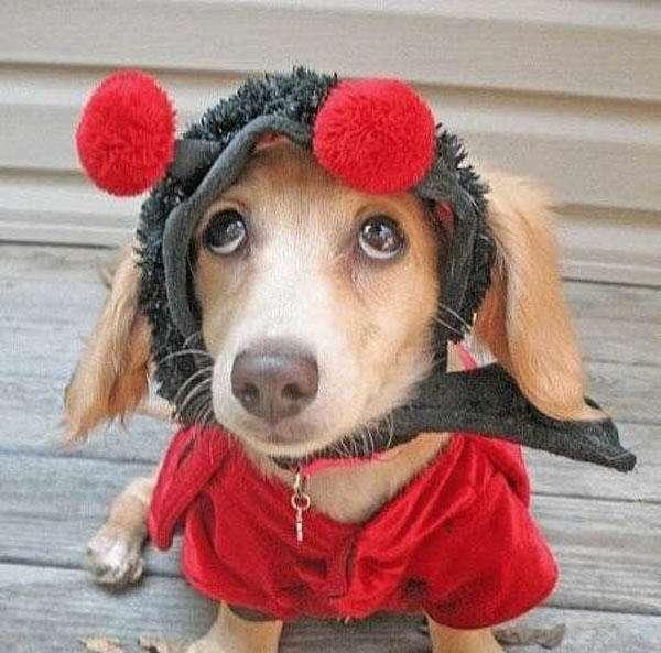 Śmieszne zdjęcia psów 33