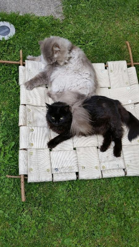 h ngematten f r draussen aus feuerwehrschlauch seite 4 katzen forum bergkatzen. Black Bedroom Furniture Sets. Home Design Ideas