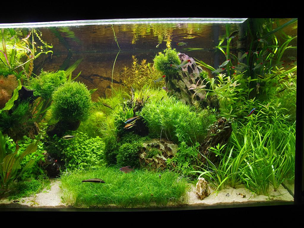 mein 360 l aquarium seite 3. Black Bedroom Furniture Sets. Home Design Ideas