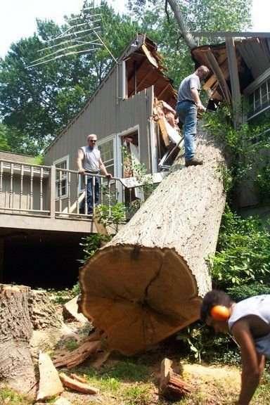 Jak nie należy ścinać drzew 3