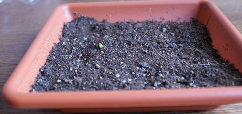 Vom Samen Zum Kaktus Erster Versuch Eve Rave Das Schweizer