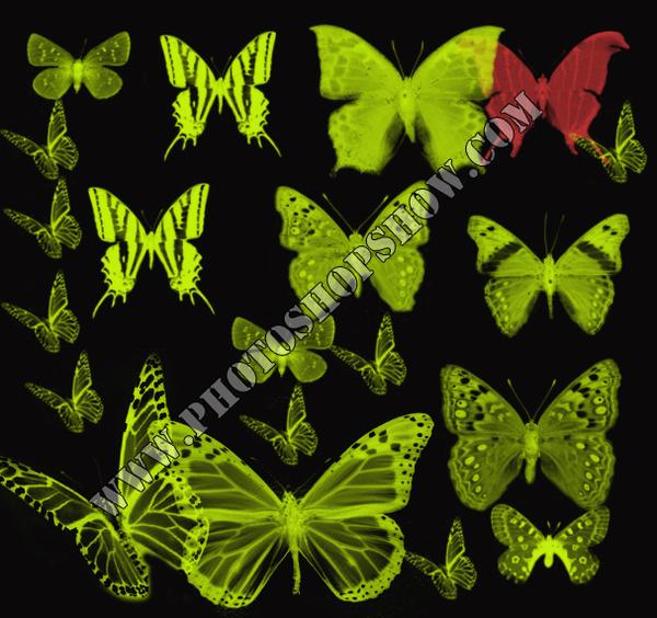 photoshop çeşitli kelebek fırçaları indir
