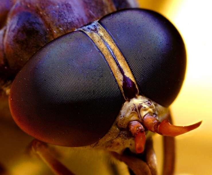 Makrofotografia - owady 47