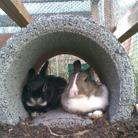 kaninchen versteck häuschen