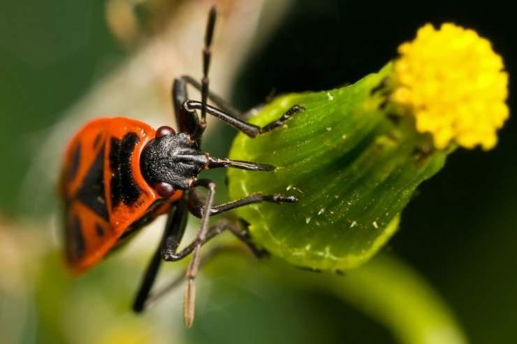 Makrofotografia: owady #2 19
