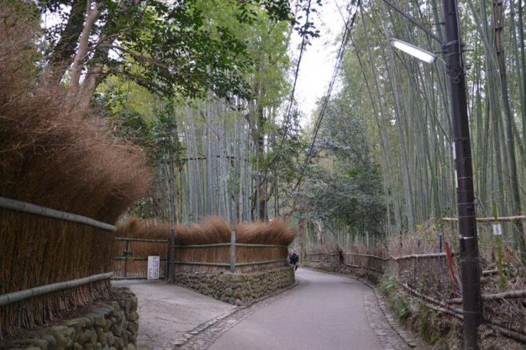 Las bambusowy 10