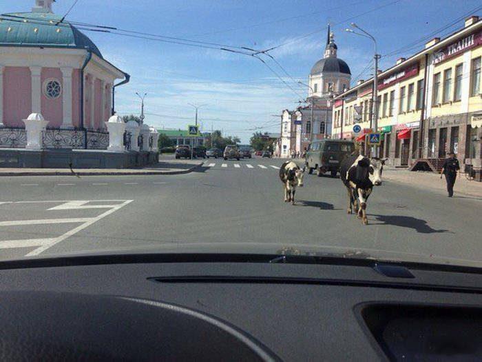 Tylko w Rosji #21 18