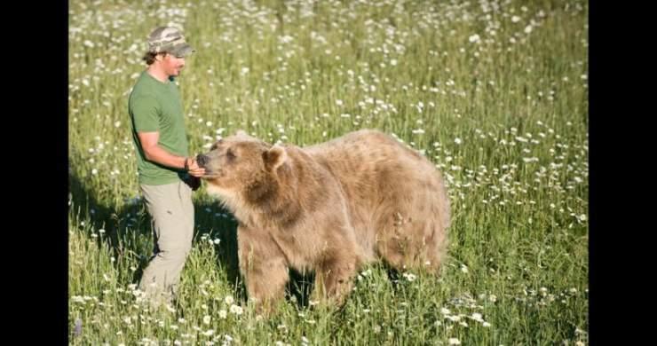 Niedźwiedź - najlepszy przyjacieł człowieka ? 21