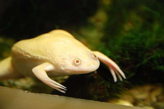 Albinosy 19