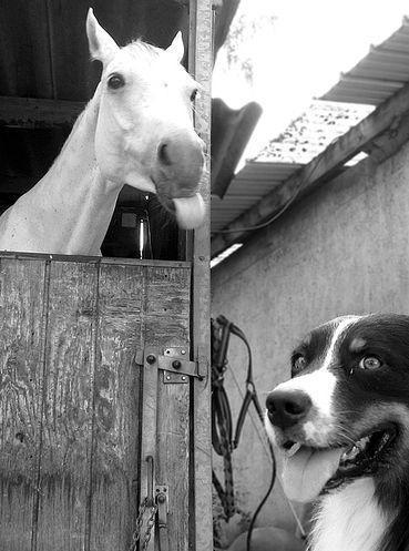 Czy konie mogą być śmieszne ? 9