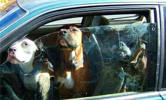 Jak zabezpieczyć pojazd przed złodziejami ? 15