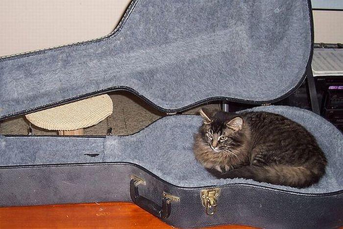 Jak przechowywać kota 91