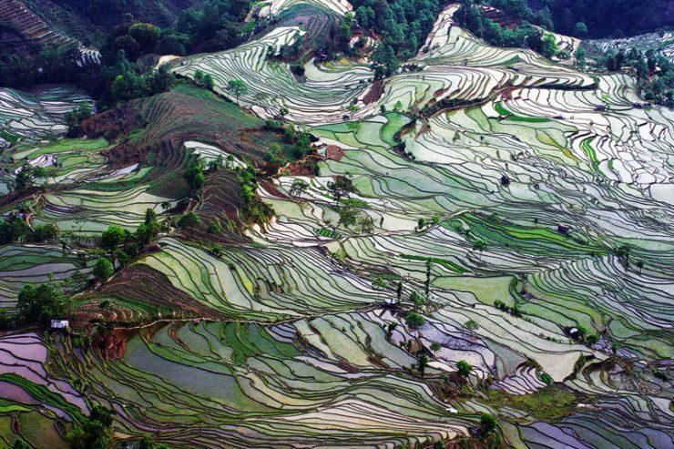 Tarasy ryżowe 4