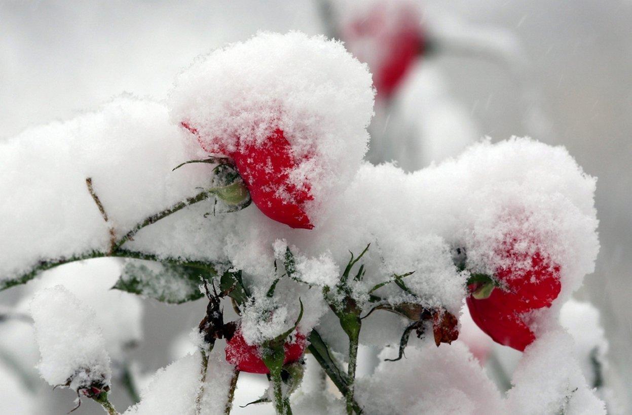 Urok zimy 18