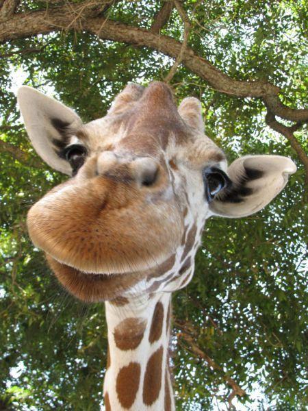 Śmieszne zdjęcia zwierząt #10 7