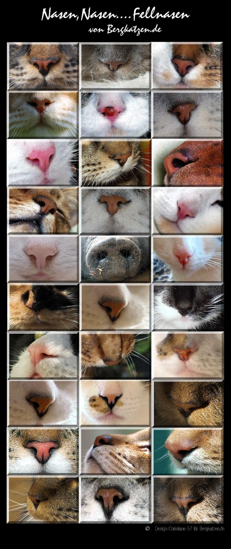 Nasen,Nasen -Fellnasen - Katzen Forum Bergkatzen