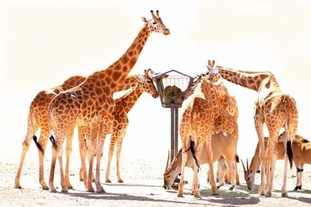 Śmieszne zdjęcia zwierząt #7 10