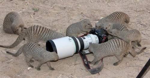 Fotografowie, czyli po drugiej stronie obiektywu 116