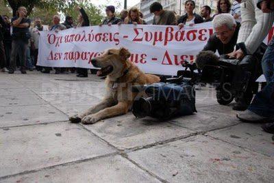 Psy z ulicznych protestów 15
