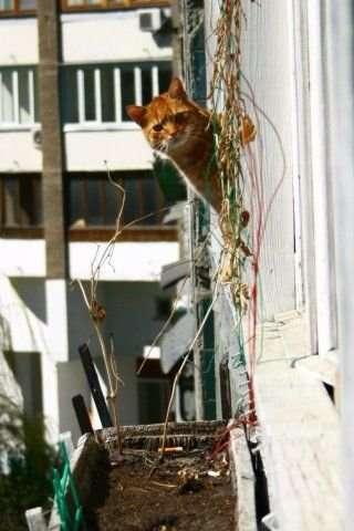 Śmieszne zdjęcia kotów 36