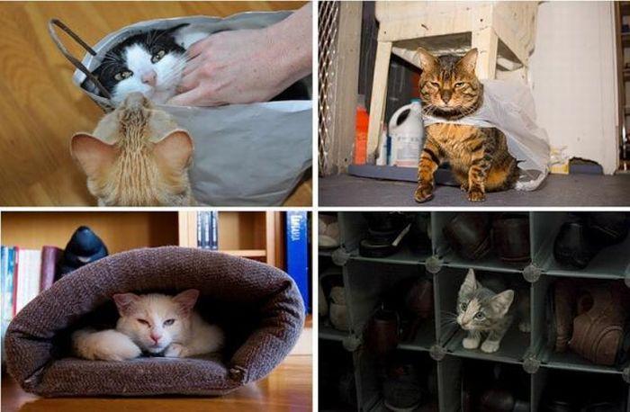 Wszędobylskie koty #2 17