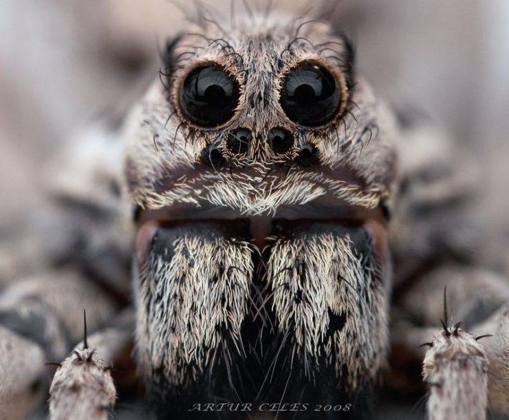 Makrofotografia: owady #3 25